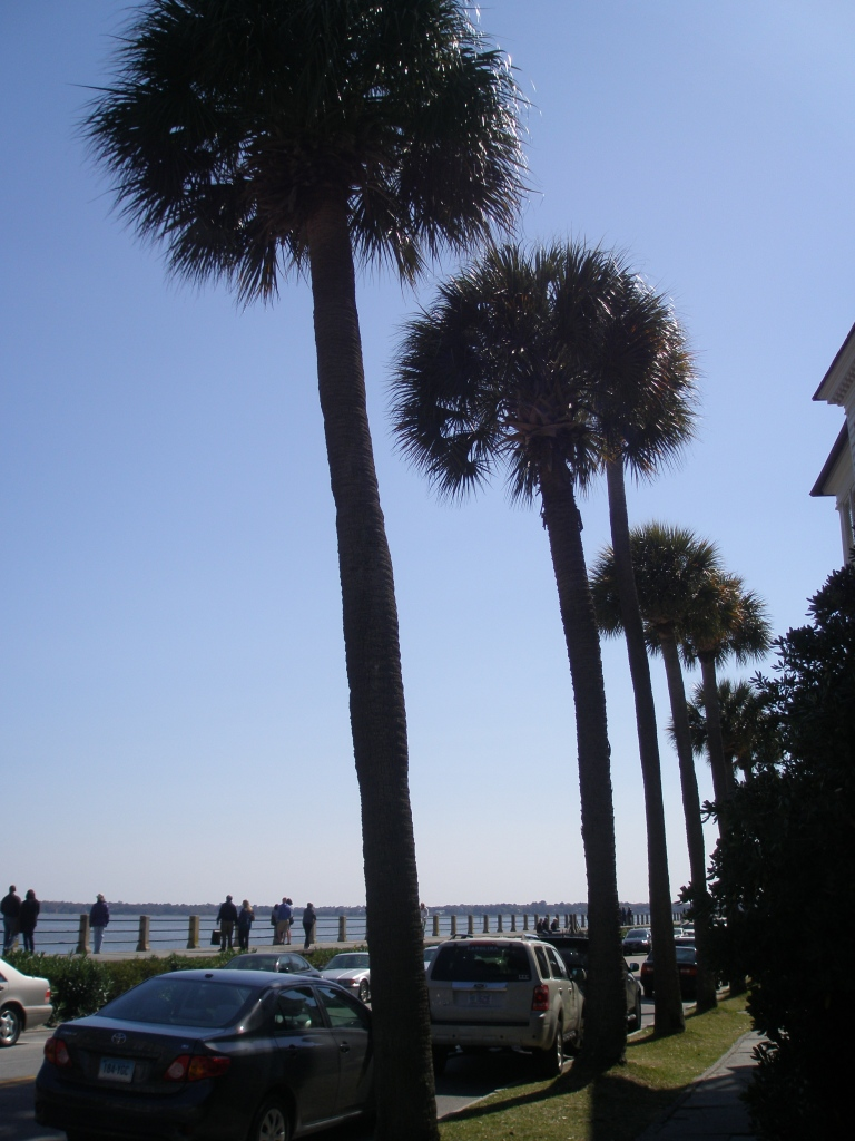 Palmettos march alongside the Promenade, where East Bay Street becomes the East Battery.