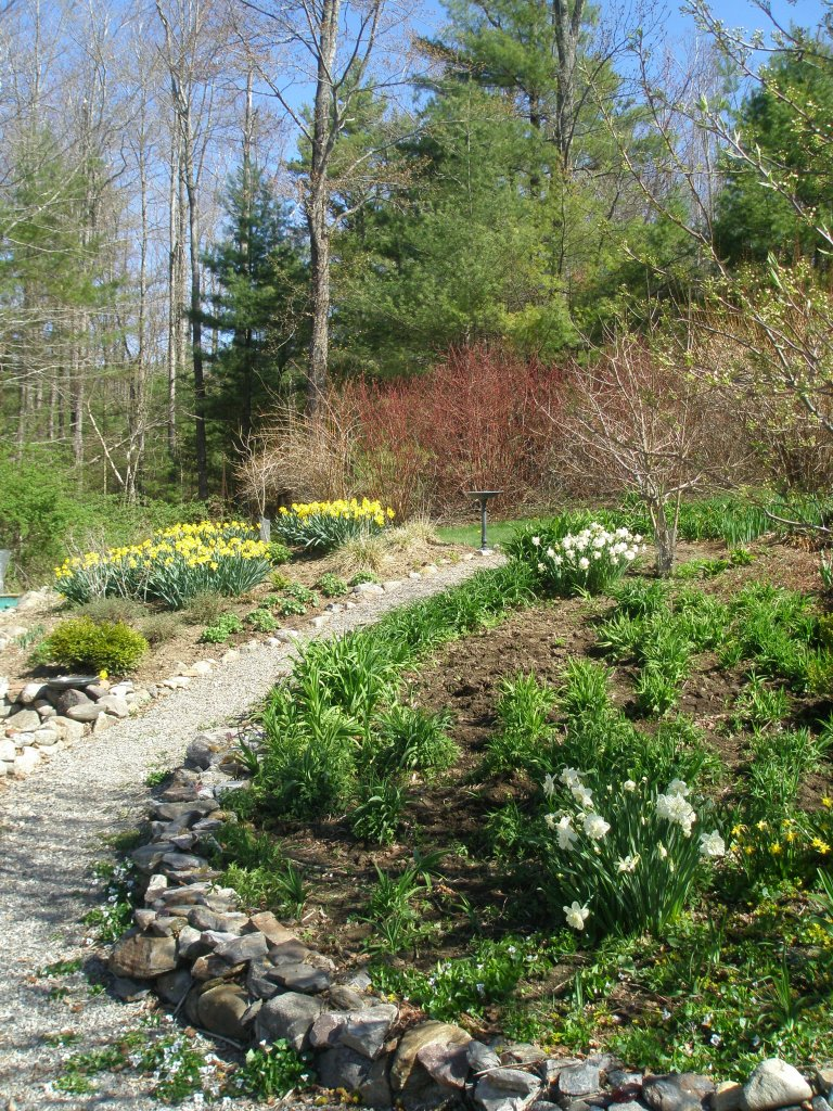 The path between the Daylily beds, and the summer cutting flower beds.
