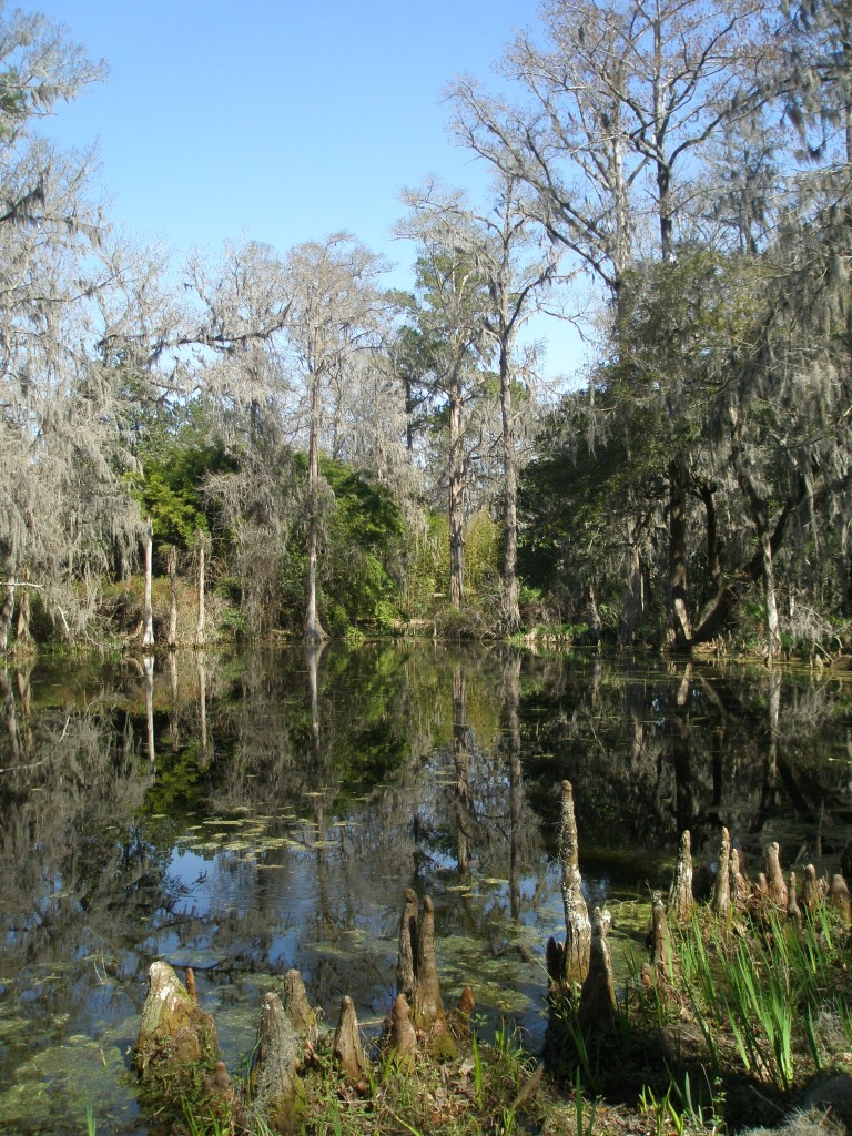 Cypress Lake...keep an eye peeled for alligators.