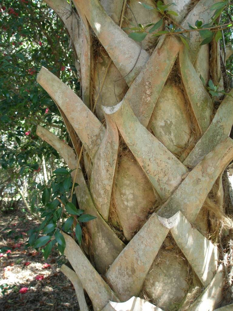 Trunk of a Palmetto Tree (read my HISTORIC CHARLESTON article to learn more about the Mighty Palmetto).