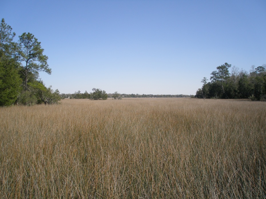 View from the Boardwalk in the Marsh Walk. So this is what it's like to navigate through a Sea of Grass!