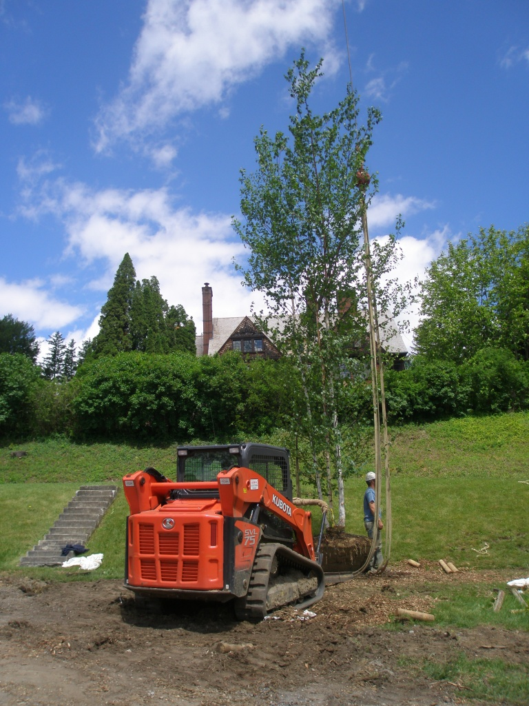 All of the old birch trees surrounding the Blue Steps have been removed, and on June 4th, the final batch of new trees were being hoisted into place.