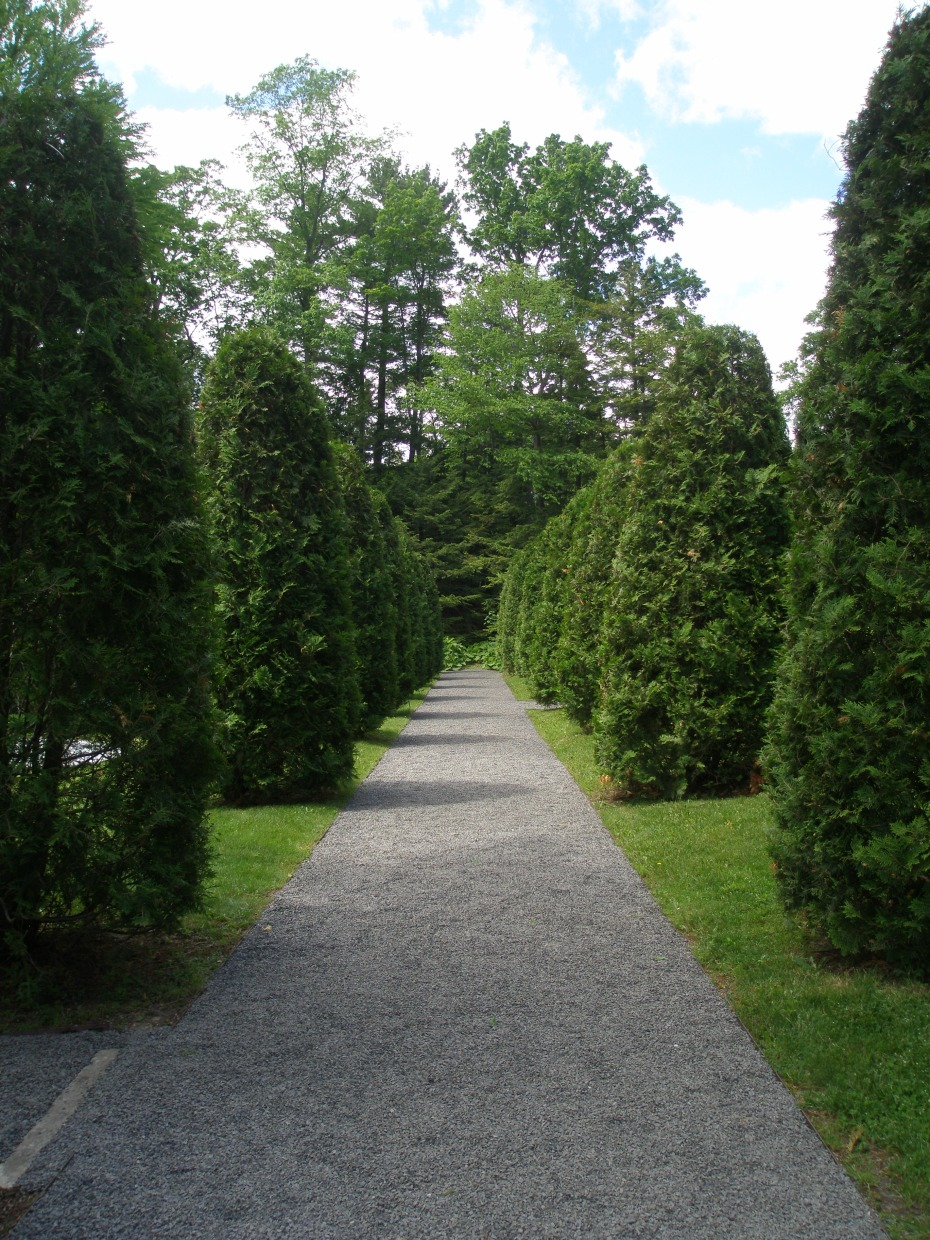 Arborvitae Walk; approaching the Evergreen Garden.
