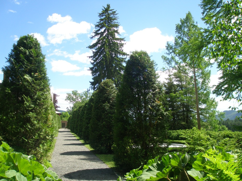 Arborvitae Walk; with a glimpse of the Evergreen Garden.