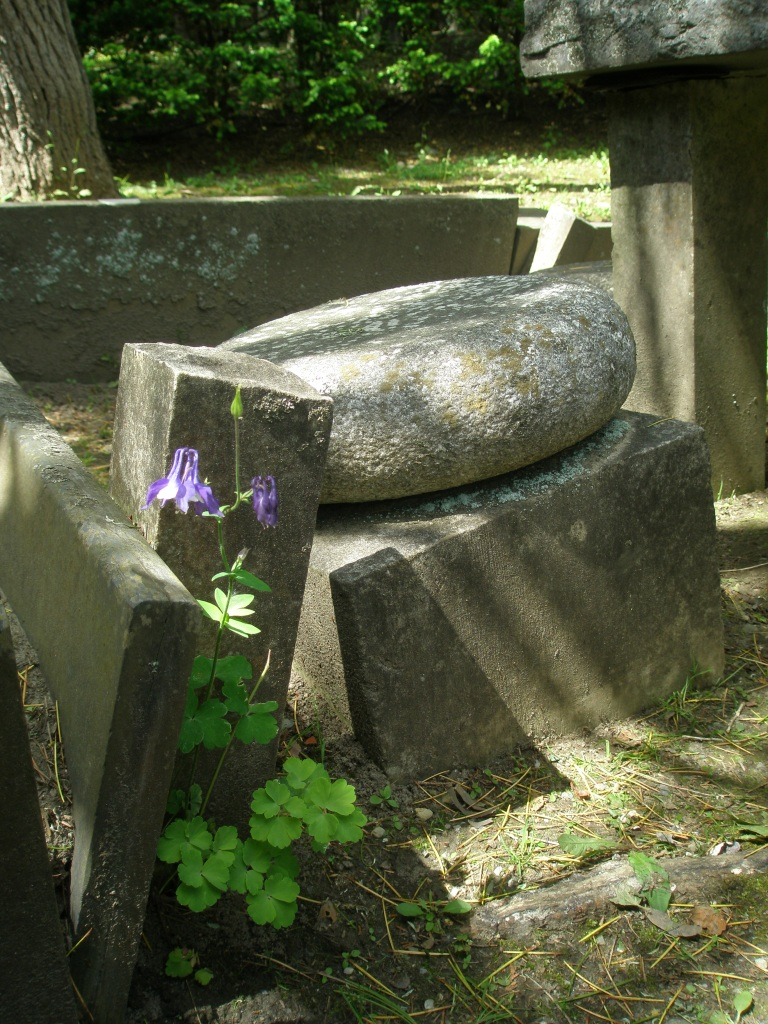 Stone Chair and Columbine