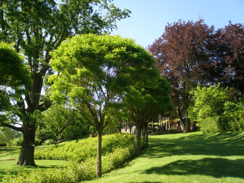 View from mid-way along the South Lawn, back toward the Afternoon Garden