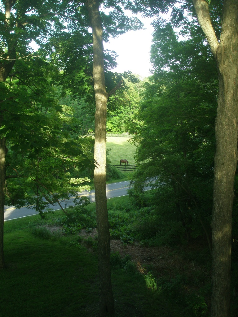 The view from my room at The Millbrook Inn on the morning of June 5, 2013