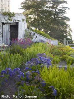 The Gardens of Alcatraz. Image courtesy of The Garden Conservancy. www.alcatrazgardens.org