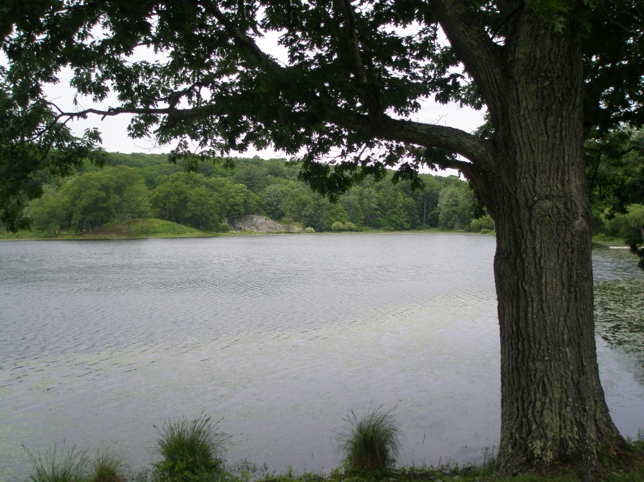 Lake, at Hemlock Woods