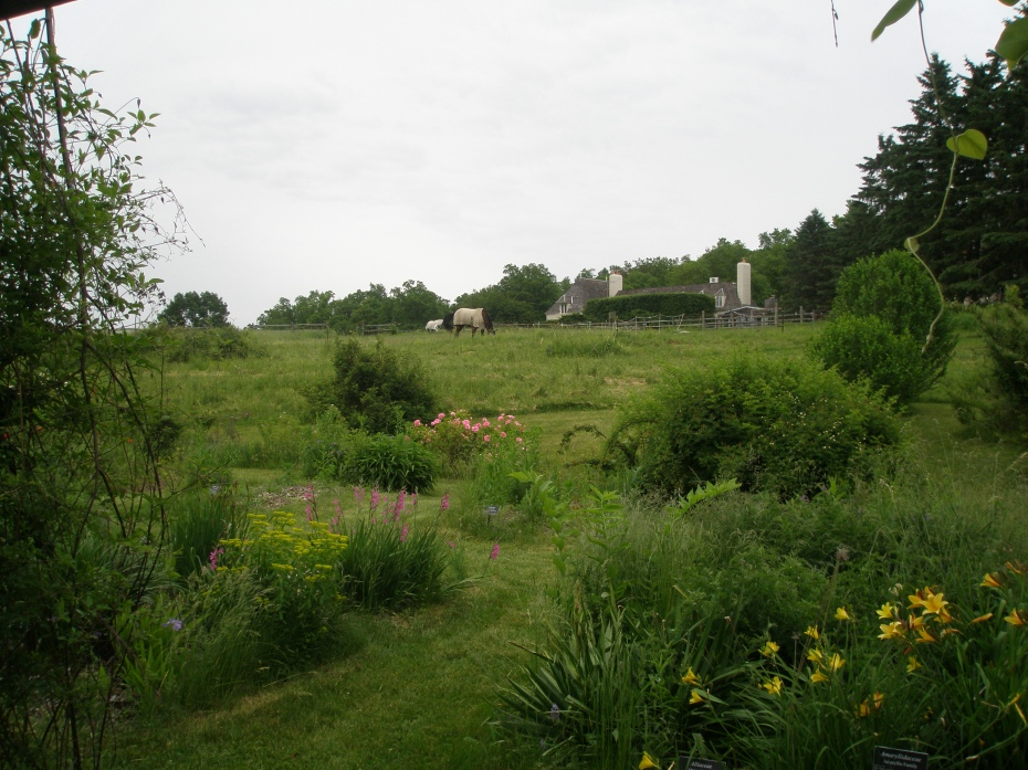 View up toward the Main House, from the Pasture