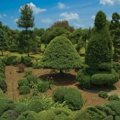The Pearl Fryar Topiary Garden. Image courtesy of The Garden Conservancy. www.pearlfryar.com