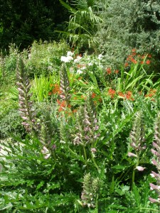 Dense plantings in the Italian Garden