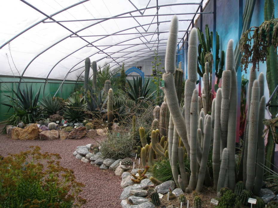 The Hot & Spikey Greenhouse is just west of The World Garden beds, and contains plants that wouldn't have a prayer of surviving outside, over England's winters.