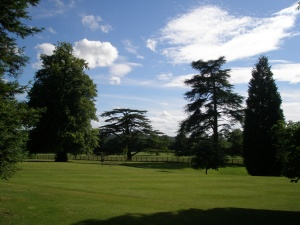 Tree-Heaven