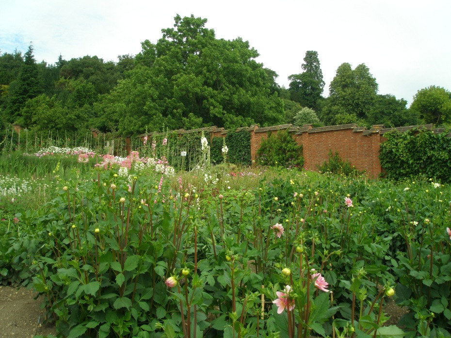 Drifts of flowers for cutting, in the Kitchen Garden