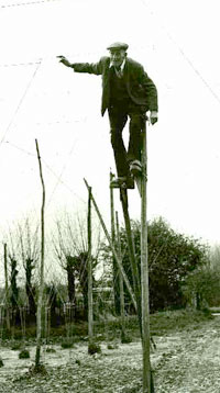 A stilt-walking Stringer, circa 1950. Image courtesy of Hopping Down In Kent.