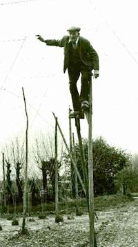 A stilt-walking Stringer, circa 1950. Image courtesy of Hopping Down In Kent.