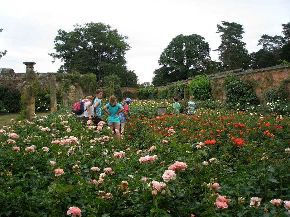 Astor's Rose Gardens contain over 4000 bushes...in a for a penny, in for a pound.