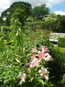 Lilies in the Rose Garden