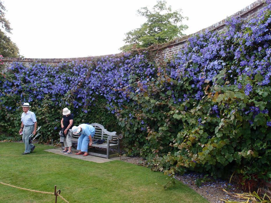 At the west end of the Rose Garden, a Lutyens Bench settles into an apse-like curve in  the clematis-covered wall.