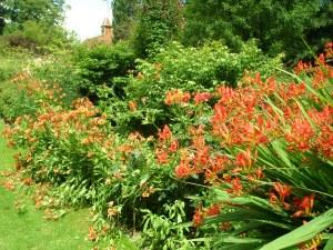 The Hot Gardens
