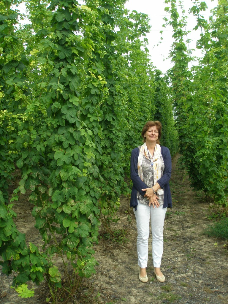 Amanda Hutchinson gamely provides human scale, in the Hop Garden at Sandhurst, on August 7th. Think of how much FUN it would be to walk down these paths on stilts!