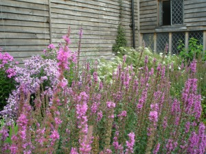 Profusions of pastels, in a corner of the Barn Garden