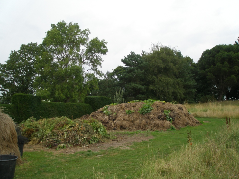 In the High Garden, compost piles. This stuff is the Black Gold of which serious gardeners dream. Notice that the compost piles also serve as homes for vigorous squash plants.