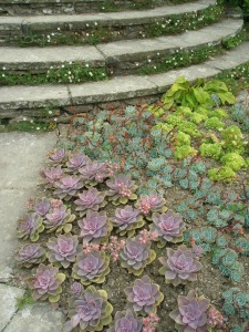 Plantings on the Circular Steps