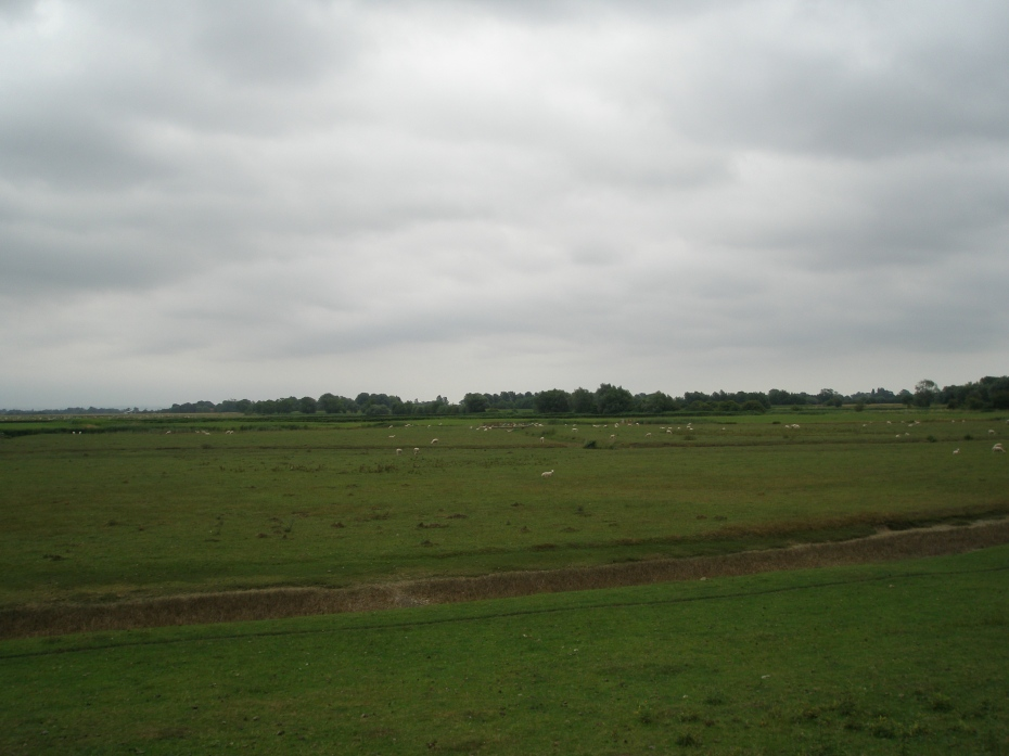 Flocks of sheep, in the fields surrounding St.Thomas Becket Church.