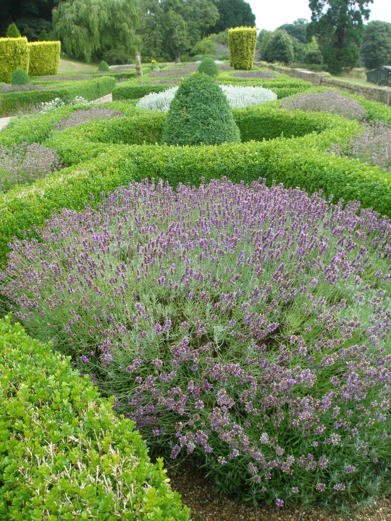 On that morning last August, the tangy scents of Boxwood  and Lavender filled the air.