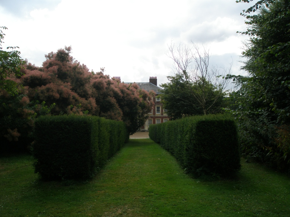 After the smoke bush, a narrow, yew-hedged walk leads us away from the House, toward a Long Avenue of Lime Trees.