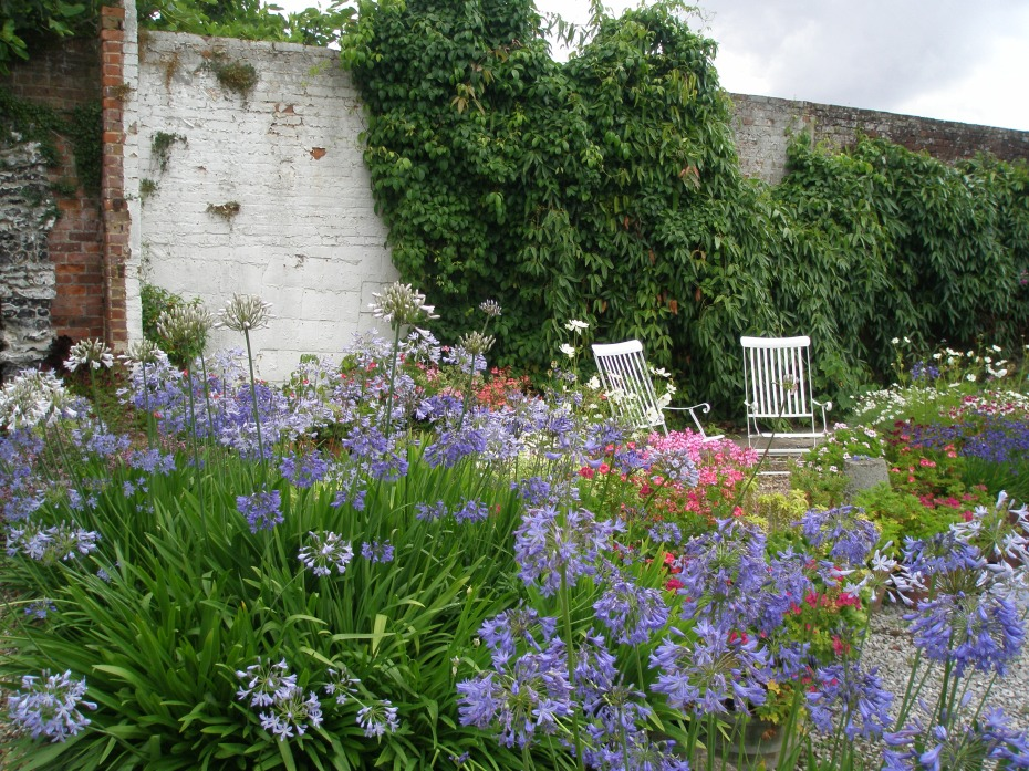 We prepared to leave the Walled Garden, but paused to admire this lush stand of Agapanthus.