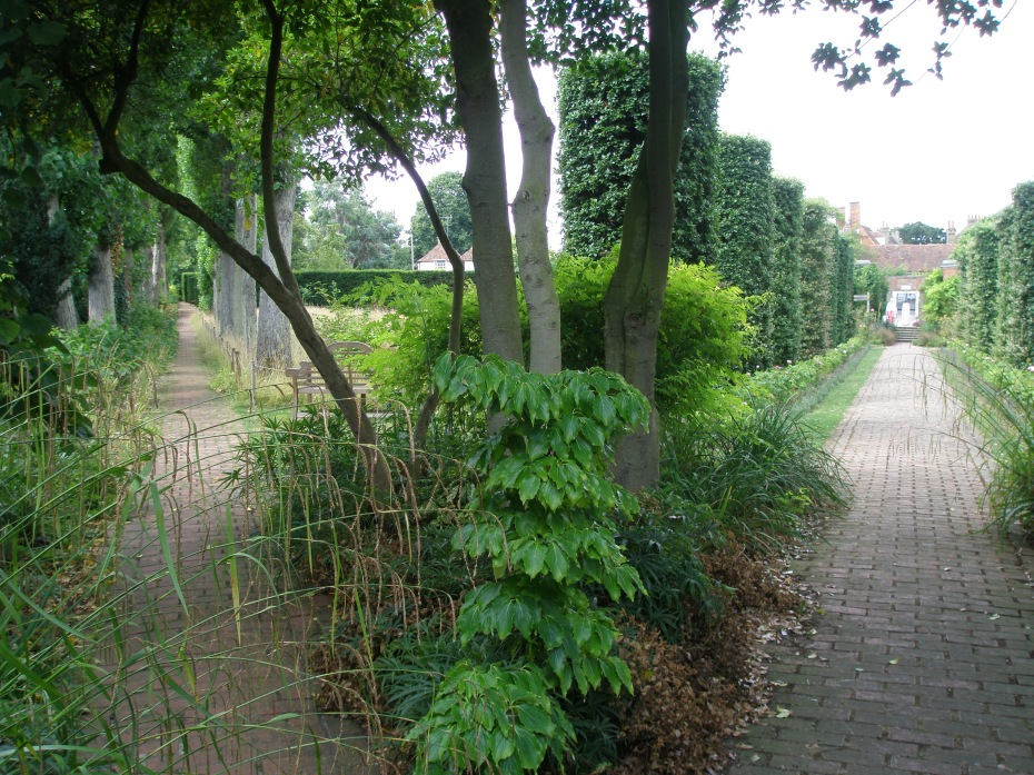 The point at which the Holm Oak Walk meets the Poplar Walk