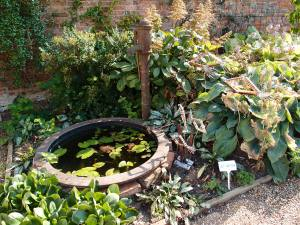 An old pump, and small lily pool, by the south wall