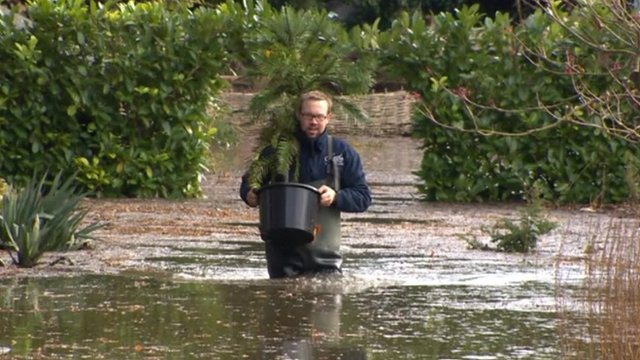 Head Gardener Steve Edney sloshed through the flood to save rare, potted plants...at least the ones which hadn't floated away.