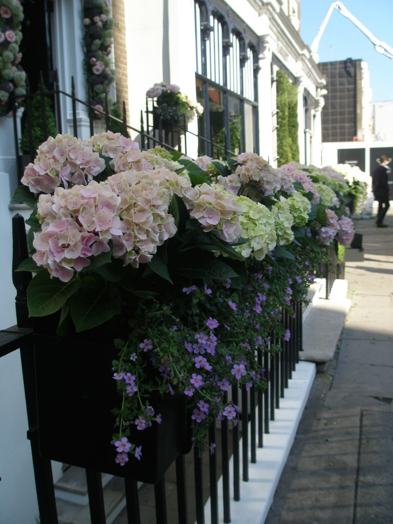 And a gorgeously-filled Sloane Street window box. Note one of London's omni-present cranes, looming in the background.