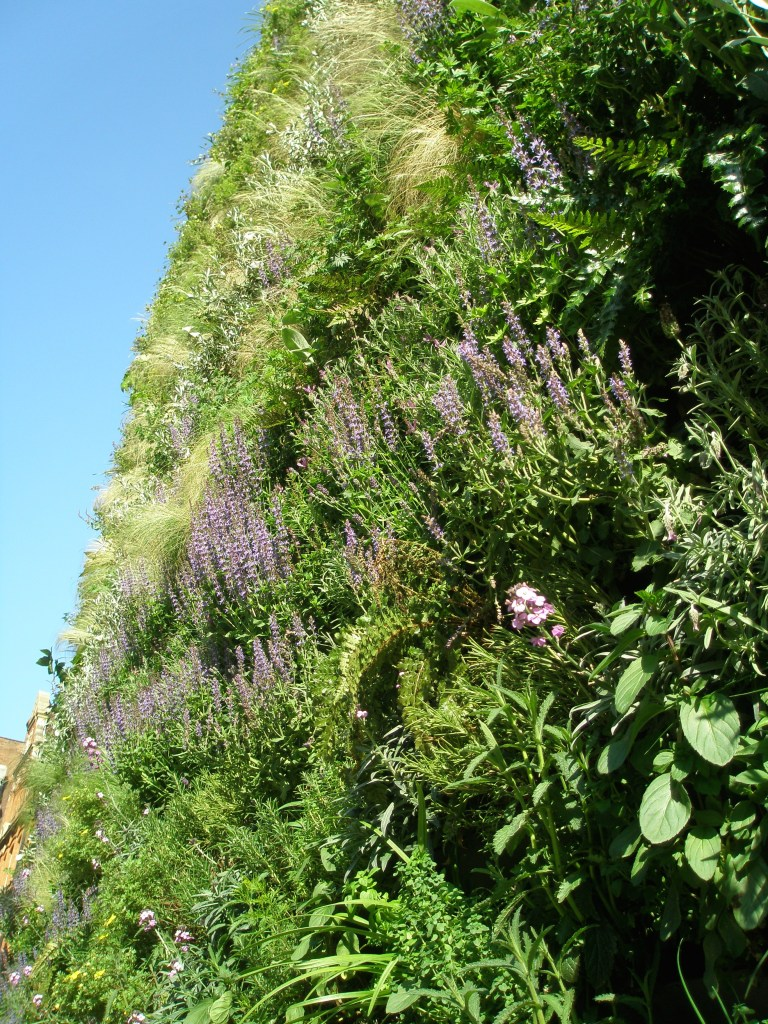 A Nose-Close view of the Green Wall
