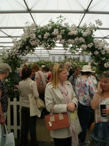 Rose-Lovers congregate at David Austin's