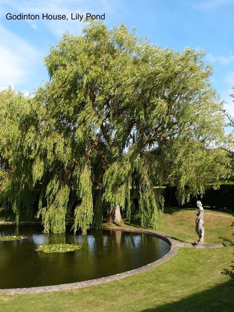 A statue anchors the far end of the Lily Pond
