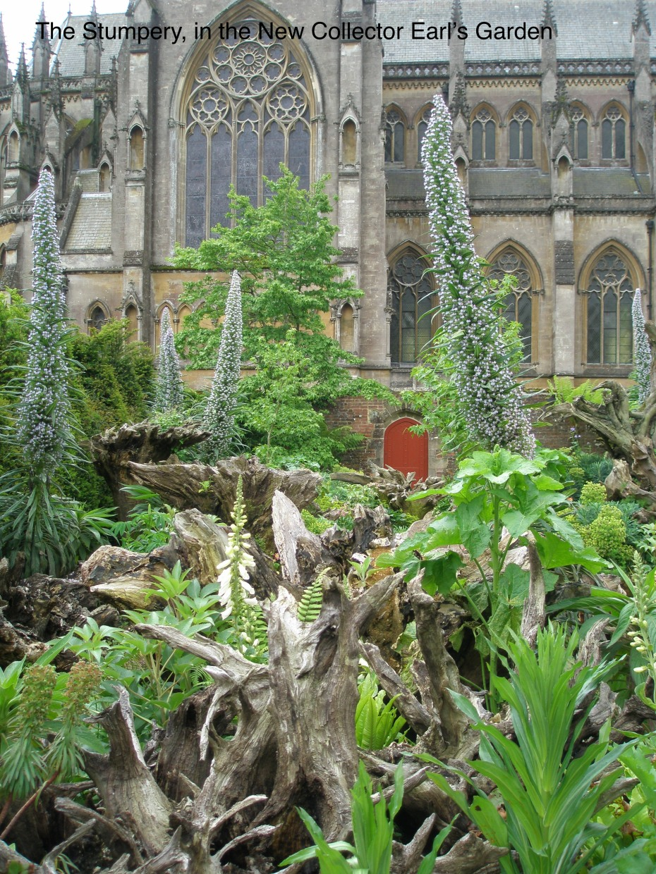But what really got my attention was the huge expanse of the STUMPERY, where massive tree roots are upended and used as visual anchors for wild and wooly garden beds. These towering plants are commonly called Tree Echium, or Pride of Madiera, and are native to the Canary Islands.