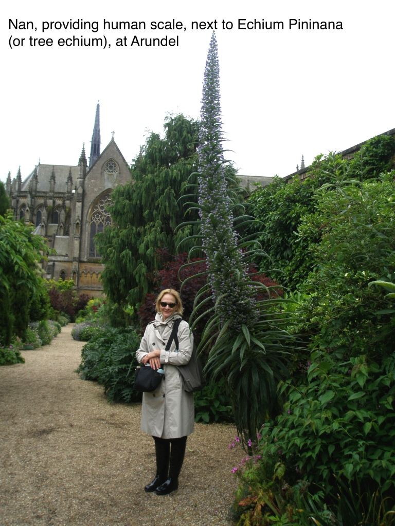 Just to drive home to you the enormity of Tree Echium, which are used for sculptural effect, here I am, to provide human scale.