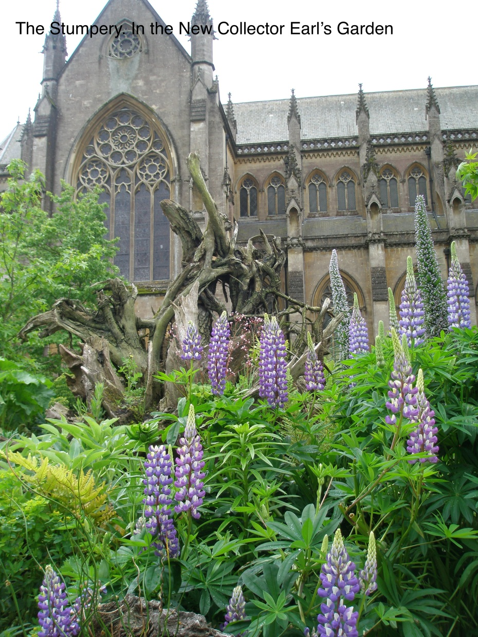 A final look at the Stumpery...and see how the blossoms of the Lupine mimic the shapes and tracery of the Cathedral windows! This is gardening, being practiced at the highest levels.