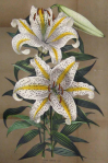Flower13