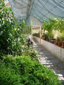 Inside the South Walled Garden's Glass House