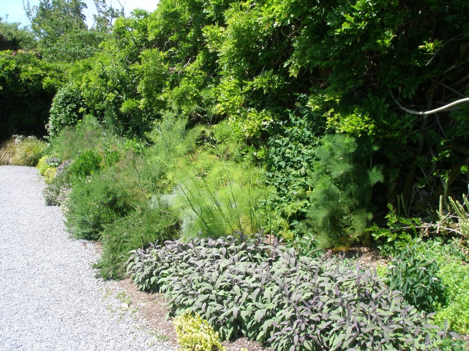 The Herb Border, in the South Walled Garden. Against the high wall behind the herbs climbs an ancient Wisteria sinensis.