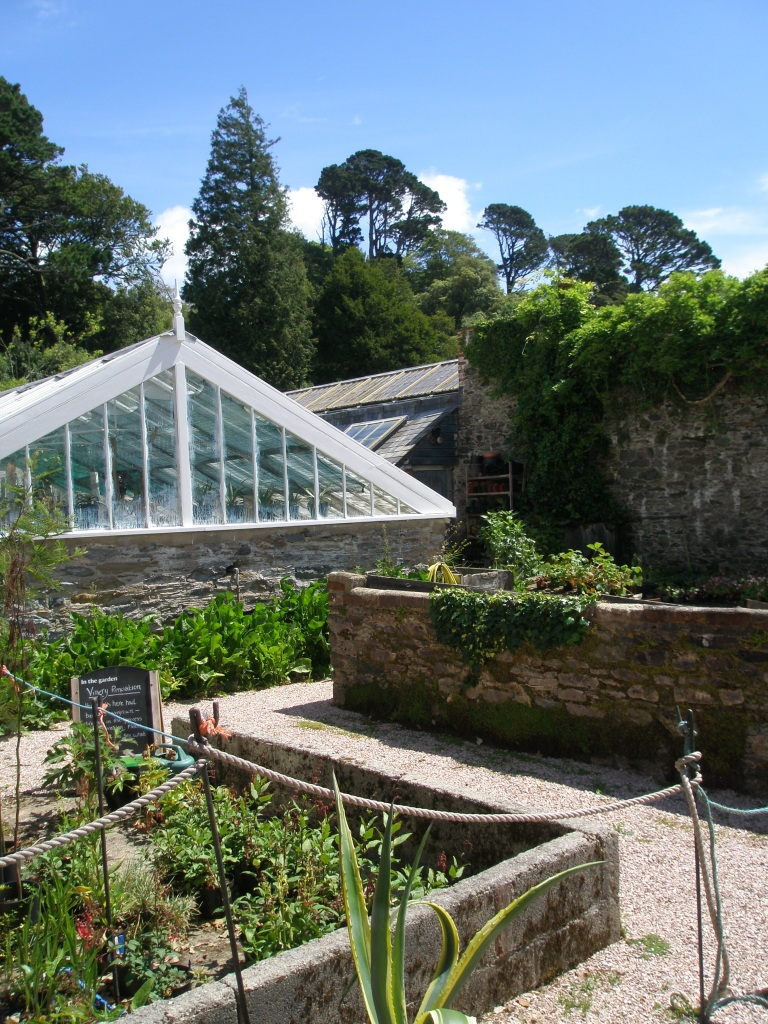 The North Walled Garden continues today, as a working nursery where plants are propagated for Greenway's gardens. This Glass House was built by Susannah Harvey in the 1870s, and in this space she grew Peaches and Nectarines.