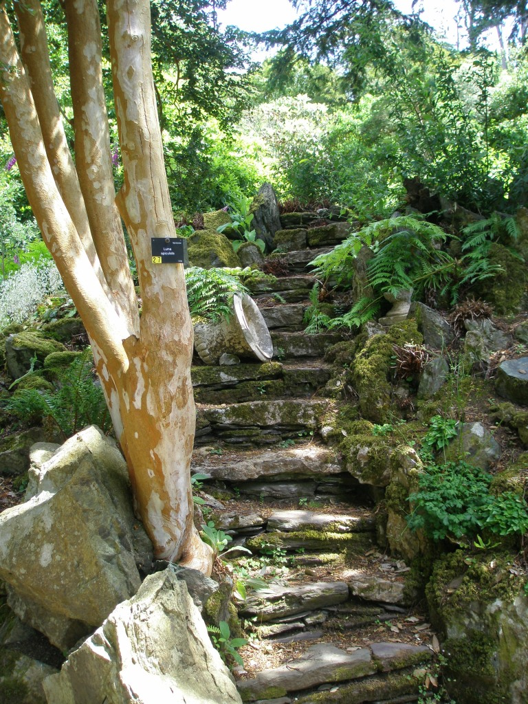 Steps in the Fernery lead to hidden garden areas
