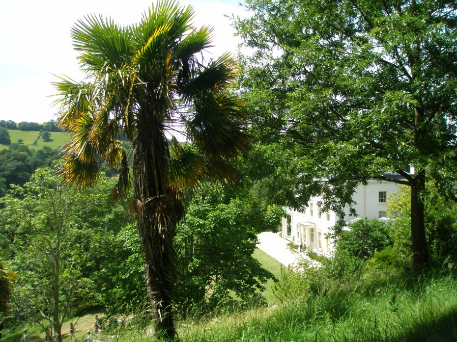 And YES, due to Southern Devon's mild climate, palm trees DO flourish. (Note: you'll see MANY more tropical plants, when I publish Part Two of my Southern Devon journals.)