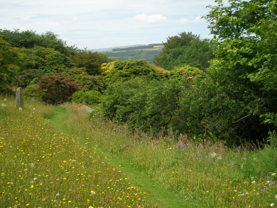 A path mown through the Wildflower Meadow leads toward the Acer Glade and Rill.